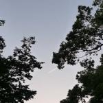 京都御苑19