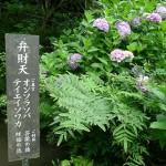 観音寺39