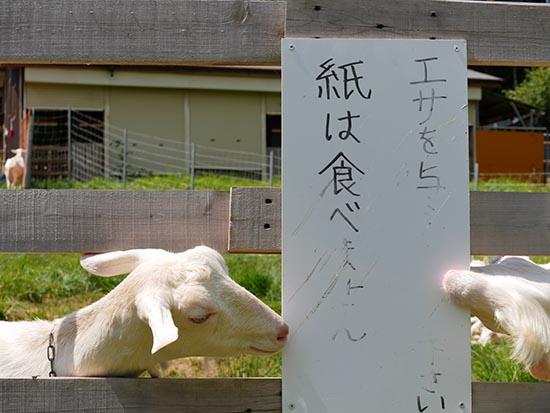 やぎ農園11