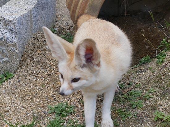 京都市動物園38