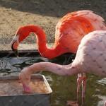 京都市動物園39