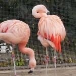 京都市動物園4