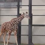 京都市動物園9