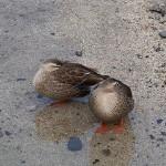 琵琶湖疏水6