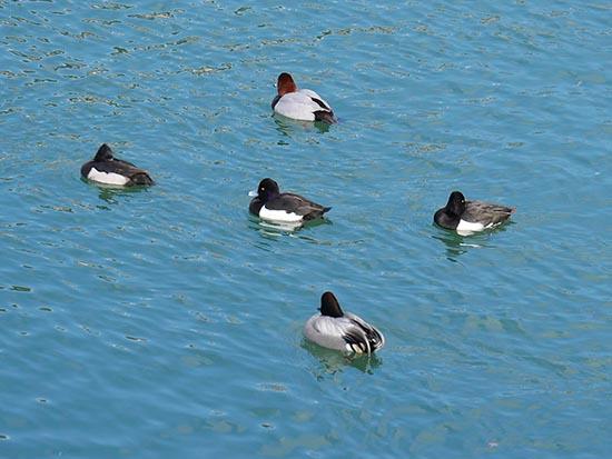 琵琶湖疏水9