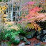 びわこ文化公園7