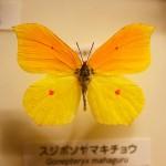 琵琶湖博物館28
