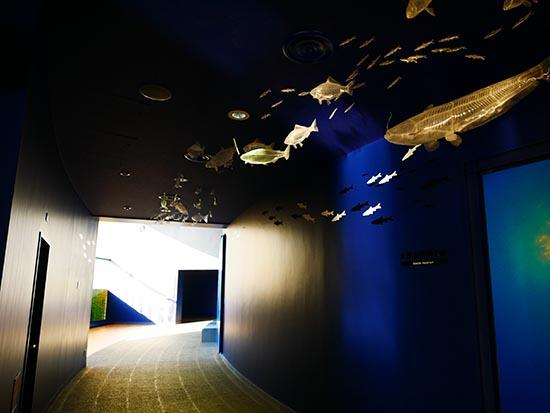 琵琶湖博物館38