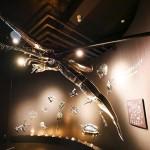 琵琶湖博物館60