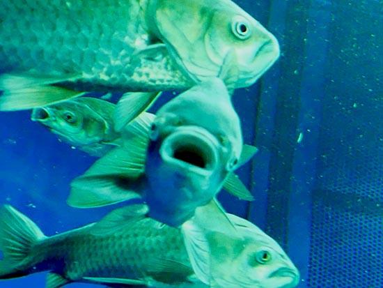 琵琶湖博物館76