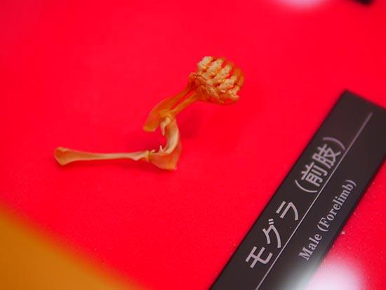 琵琶湖博物館9
