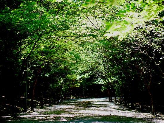 近江神宮48